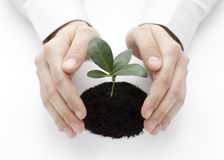 Small plant protected by hands Stock Image
