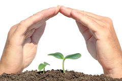 Small plant protected hands Stock Image