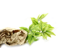 Small plant in recycled paper Royalty Free Stock Photography