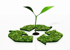 Small plant in a recycling symbol Stock Images