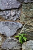 Small Plant and rock Royalty Free Stock Photography