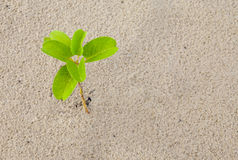 Small plant in sand Stock Photos