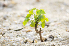 Small plant on sand. New sprout - Small plant on sand Stock Images