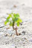 Small plant on sand. New sprout - Small plant on sand Stock Photo
