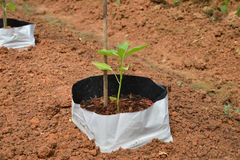 Small Plant, Sapling Stock Photos