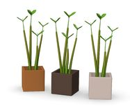 Small plant - seed Royalty Free Stock Photos