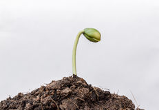 Small plant seedling close Stock Photography