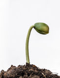Small plant seedling close Stock Photo