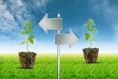 Small plant seedling and Empty signposts on view background 3 Royalty Free Stock Image