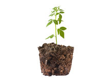 Small plant seedling II Stock Images
