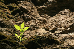 Small plant is shined on the hill layer Royalty Free Stock Images