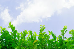 Small plant with sky. Small plant with clear sky Royalty Free Stock Photography