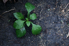 A small plant in soil-New life. Stock Photography