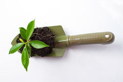 Small plant and soil in spade Stock Image