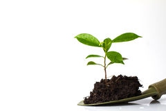 Small plant and soil in spade Stock Photos