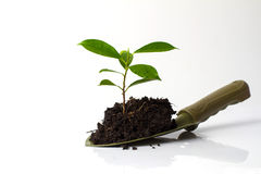 Small plant and soil in spade Royalty Free Stock Image