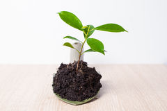 Small plant and soil in spade Royalty Free Stock Photo