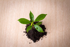 Small plant and soil Royalty Free Stock Photo