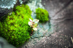 Small plant on the stone Stock Photos