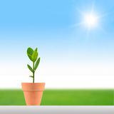 Small plant and sun. Small plant in a pot on a sun shiny day Royalty Free Stock Photos