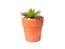 Small plant. Top view for small plant on white background royalty free stock images