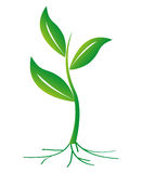 Small Plant. Vector illustration of green plant with leaf and the root Royalty Free Stock Images
