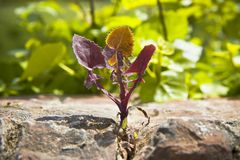 Small plant was born in an improbable place - power of life conc. Ept image Royalty Free Stock Image