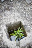 A small plant was born in an improbable place Royalty Free Stock Image
