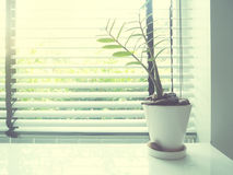 Small plant on white desk beside window Royalty Free Stock Photography