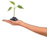 Small plant in womans hand Royalty Free Stock Images