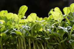 Small plants royalty free stock image