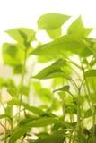 Small plants Stock Photos