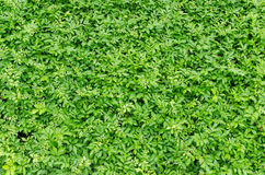 Small plants background Royalty Free Stock Image