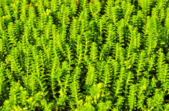 Small plants background Stock Images