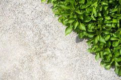 Small plants beside the concrete floor Royalty Free Stock Images