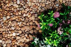 Small plants between flagstones Stock Photos