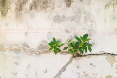 Small plants germinated from the cracked concrete wall background Stock Photos
