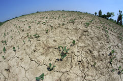 Small plants grow in the arid soil of the field in summer 2 Royalty Free Stock Photo