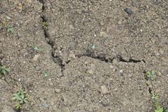 Small plants grow out of the cracks in the ground royalty free stock photos