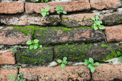 Small plants growing on a wall. Small plants growing on an old brick wall, Wat Maha That, a Buddhist temple in Ayutthaya, Thailand stock photo