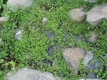 Small plants. Growing in water Royalty Free Stock Image