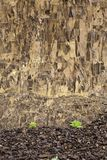 Small plants and large rock wall. Royalty Free Stock Image