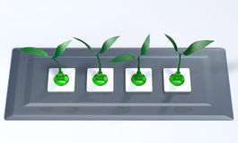 Small plants plugged in a support panel Royalty Free Stock Images