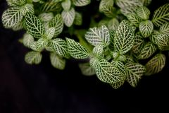 Small plants that are refreshing and refreshing. 