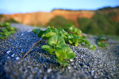 Small plants in sand Stock Images