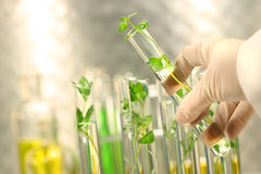Small plants in test tubes Royalty Free Stock Photography