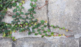 Small plants on the wall Stock Photo