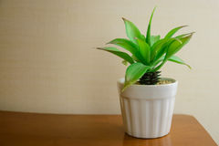Small plastic plant in ceramic pot on table Stock Photography