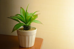 Small plastic plant in ceramic pot on table Royalty Free Stock Photo