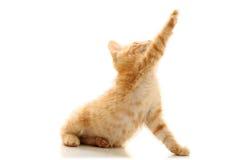 Small playful kitty Stock Photo